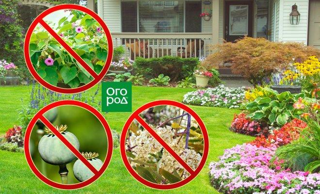 За какие растения на участке могут оштрафовать и привлечь к уголовной ответственности