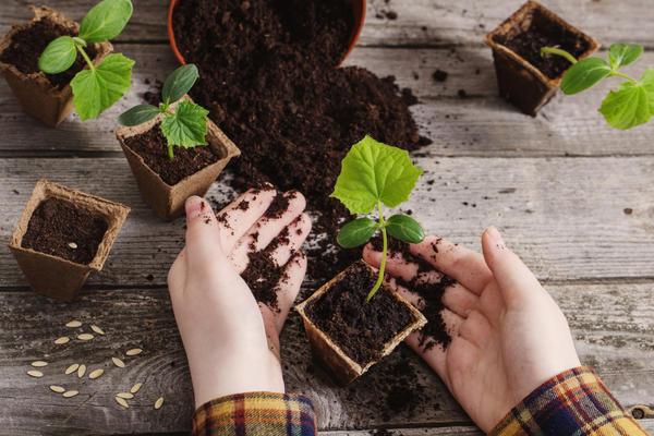 Огурцы на подоконнике от посева до сбора урожая огород