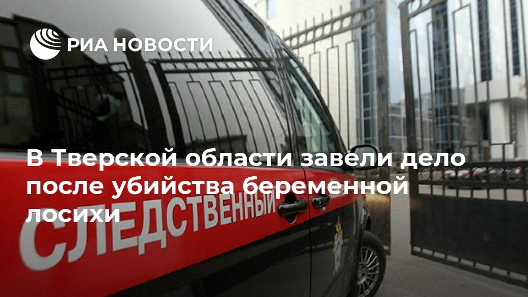 В Тверской области завели дело после убийства беременной лосихи Лента новостей