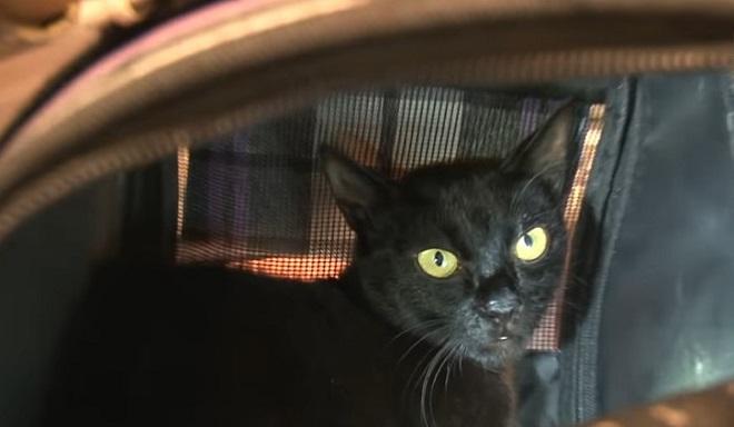 Находка в магазине: отвергнутый котенок искал маму-кошку, но та почему-то пряталась! У нее была на то причина