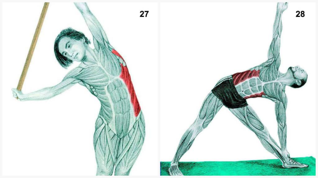 Упражнения мускулатуры в картинках