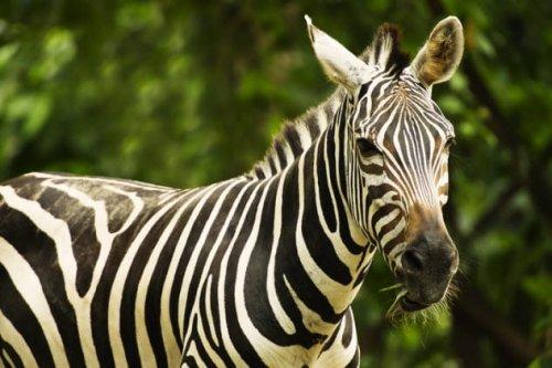 ТОП-10: Животные, которых нам не удалось приручить