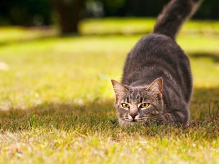 Кот - это охотник. ¦Фото: yandex.by.