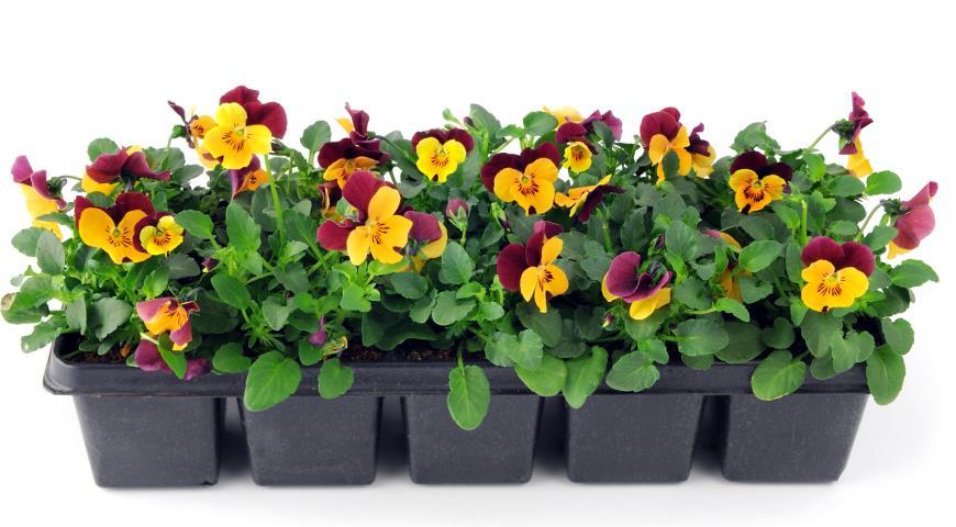 Рассада в марте: точные даты посева цветов и овощей на рассаду в марте 2021 года