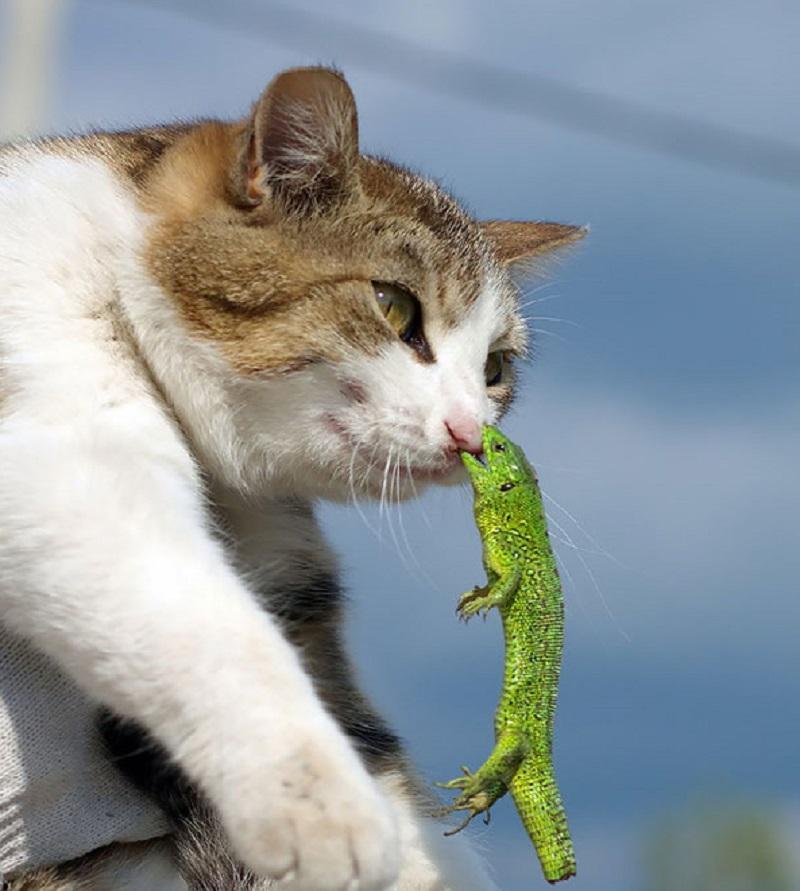 15 кошек, которые пожалели о своих необдуманных поступках