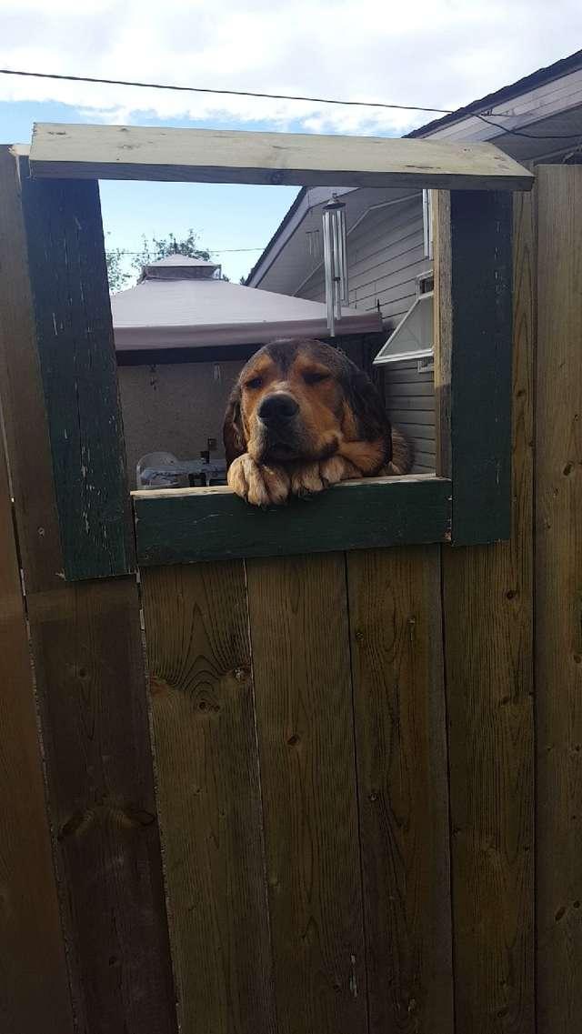 Люди заметили, что соседка тайком гладит их пса через забор истории из жизни
