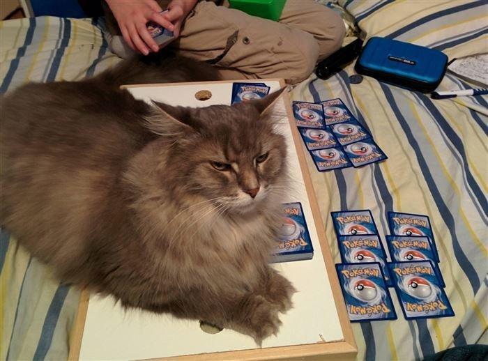 """""""Хватит играть, хозяин"""" животные, кот, коты, кошки, приколы с животными, смешно, фото, юмор"""