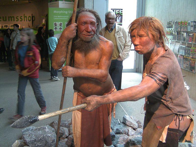 «Российские» неандертальцы вымерли позже «западных»