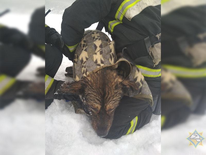 Спасатели приютили собаку, тонувшую в Свислочи, а теперь разыскивают ее хозяев