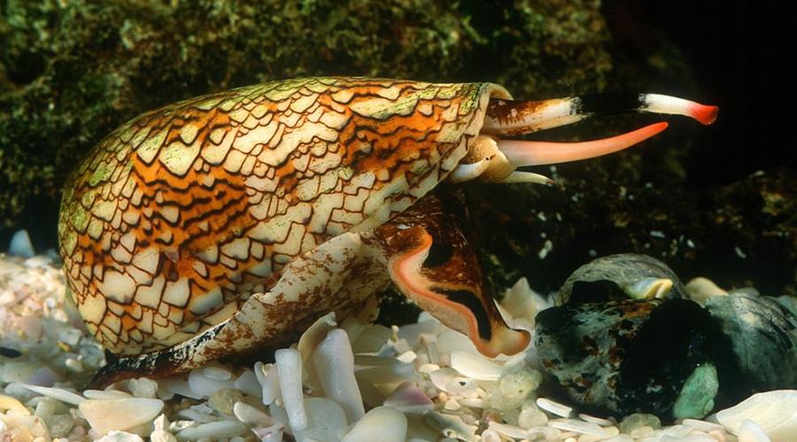 Смертельно опасные создания, которые вы зря считали безобидными