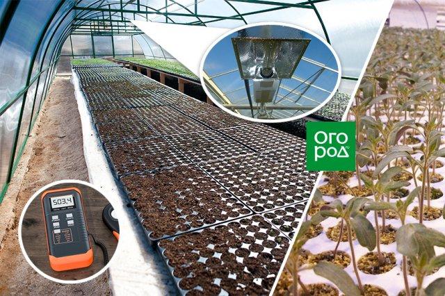 выращивание рассады в теплице