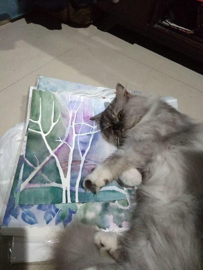 Сегодня кот выбрал рисунки как место для сна животные, кот, коты, кошки, приколы с животными, смешно, фото, юмор