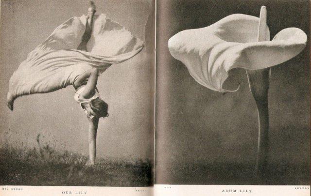 Стефан Лорант «Наша Лили и Арум Лилия» 1937 год. история, люди, мир, фото