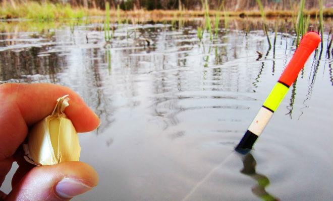Рыбак показал ловлю рыбы на чеснок: утащило удочку