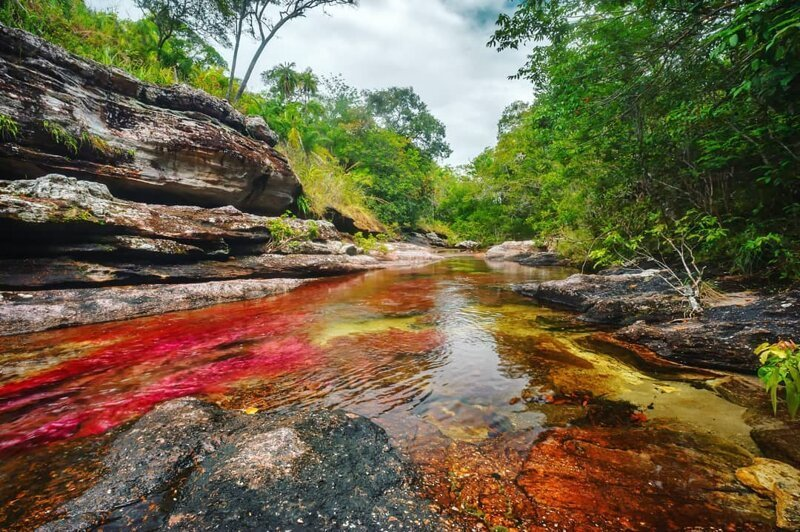 В Колумбии «расцвела» река пяти цветов в мире, колумбия, природа, река, удивительно, феномен, фото, цвета