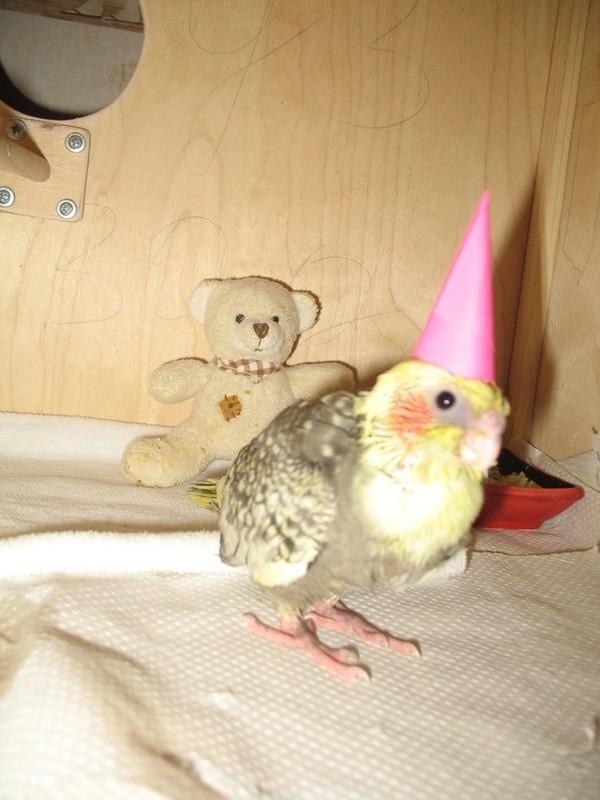 Месяц с момента его вылупления мы праздновали с шампанским и хлопушками ☺ (ему шампанского не давали) дети, мама, птицы
