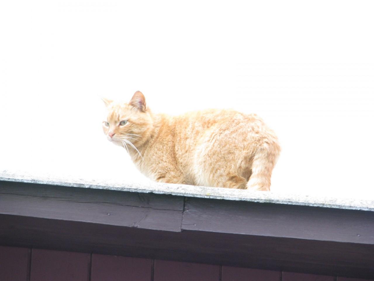Братья наши меньшие: кошка в  зеркале?