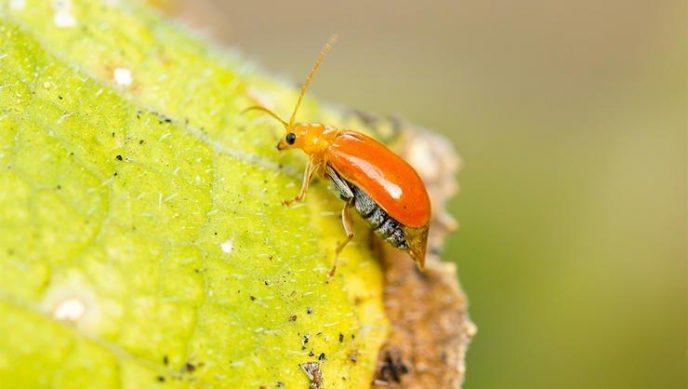7 насекомых, которых вы едите и даже не знаете об этом