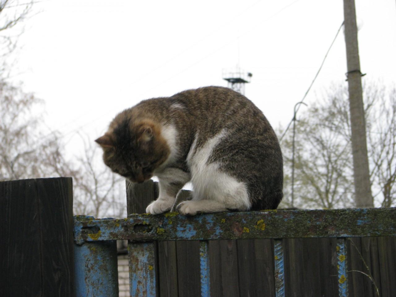 Братья наши меньшие: кошка знает, какой дом нужно обойти