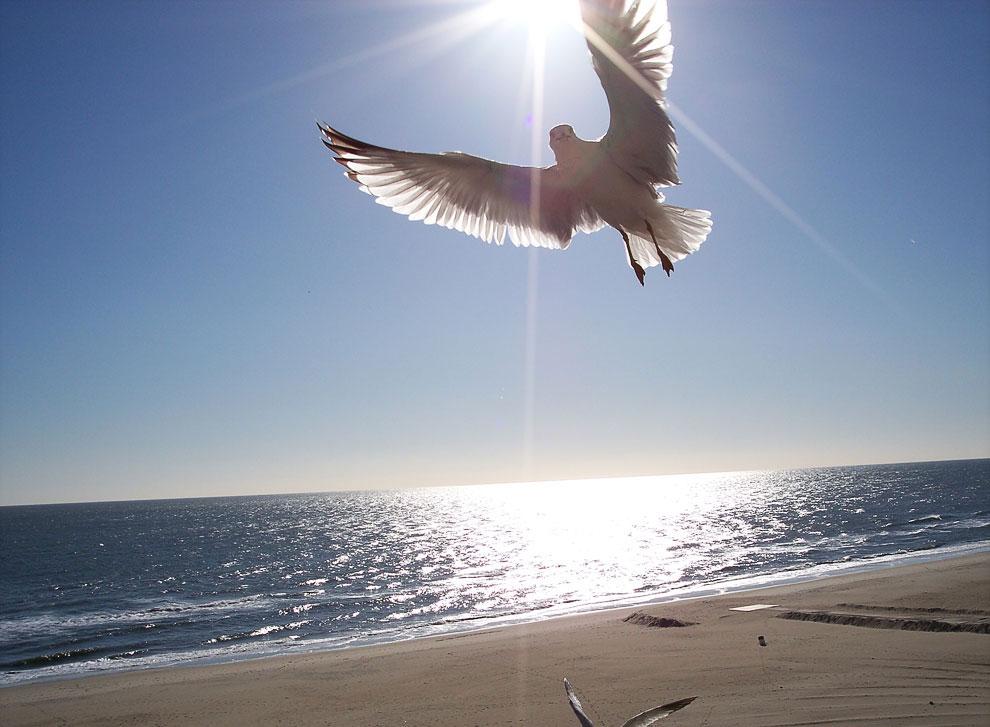 Пляжи Вирджиния-Бич (США)