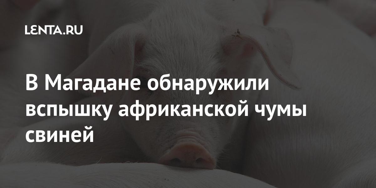 В Магадане обнаружили вспышку африканской чумы свиней Россия