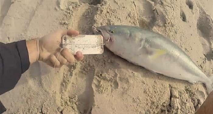 Австралиец поймал рыбу на Айфон!