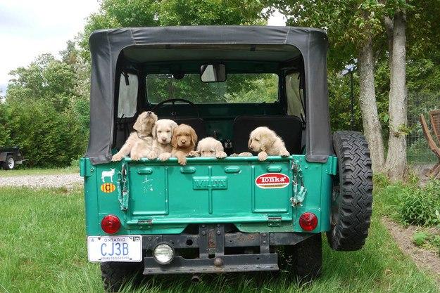 самые милые щеночки в мире (25)
