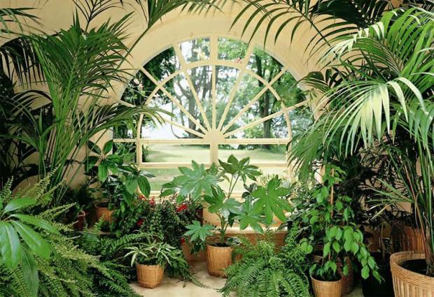 Как очистить воздух в квартире: что важно знать при выборе комнатных растений