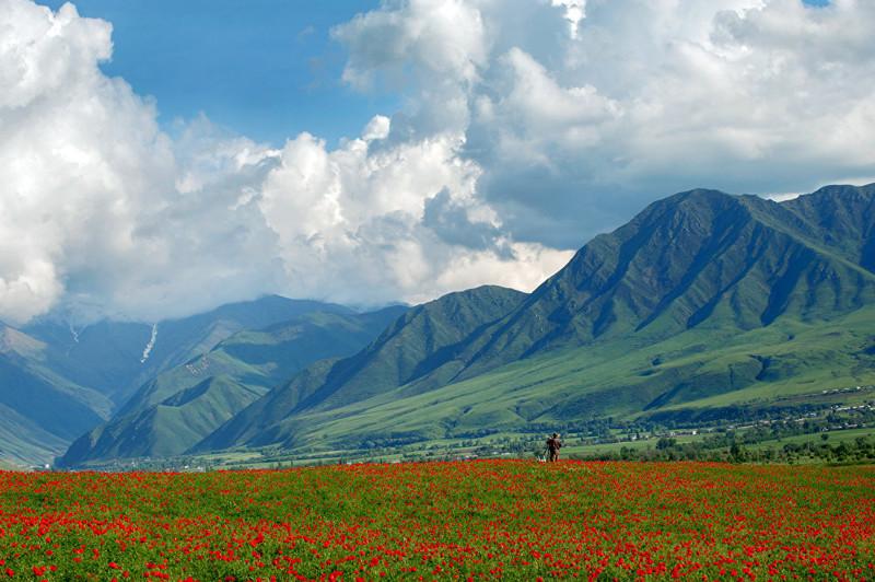 5. Ученым известно около 100 видов мака art, Кыргызстан, пейзаж, ссср, факты