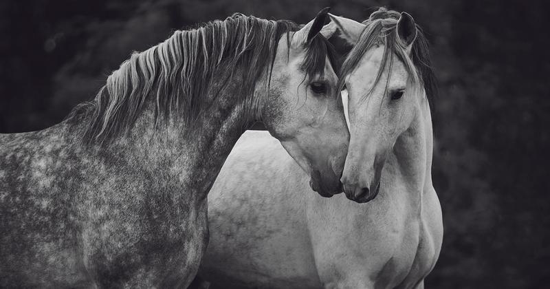 Лошади, которые дали девушке-фотографу силы жить