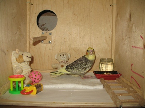 А к месяцу мы убрали лишнее из домика и подготавливали птенца к переходу на твердый корм: дети, мама, птицы