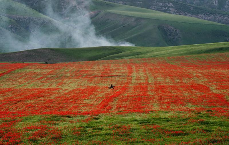 9. Холмы и пригорки пылают цветочным огнем art, Кыргызстан, пейзаж, ссср, факты