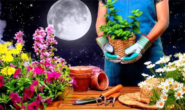 Картинки по запроÑу ПереÑадка комнатных раÑтений и поÑадка Ñадовых цветов по лунному календарю 2019!
