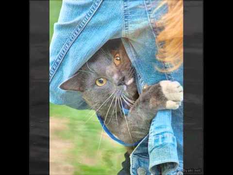 У кошки четыре ноги