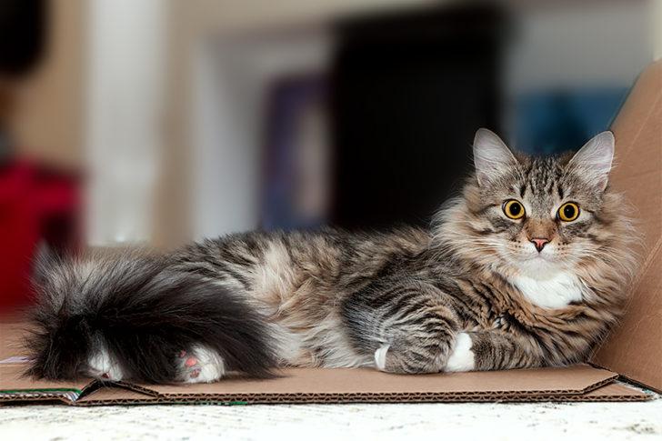 Мой кот уложил меня в травматологию и даже ни грамульки не раскаялся