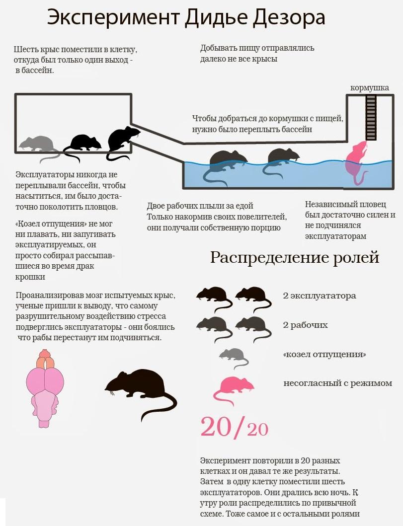 Социальная иерархия: эксперимент с крысами