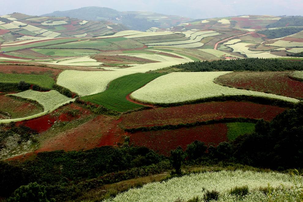 таня фото выращивание риса в испании статье представлен топ