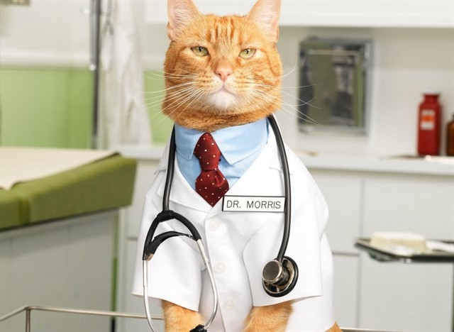 4. Кошки - лучшее лекарство животные, коты, факты
