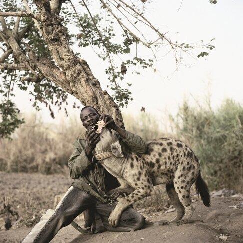 В-пятых, они очень социальны и им нужно постоянно общение с хозяином и сородичами, иначе они обозляются африка, гиены, животные, интересное, приручение, факты