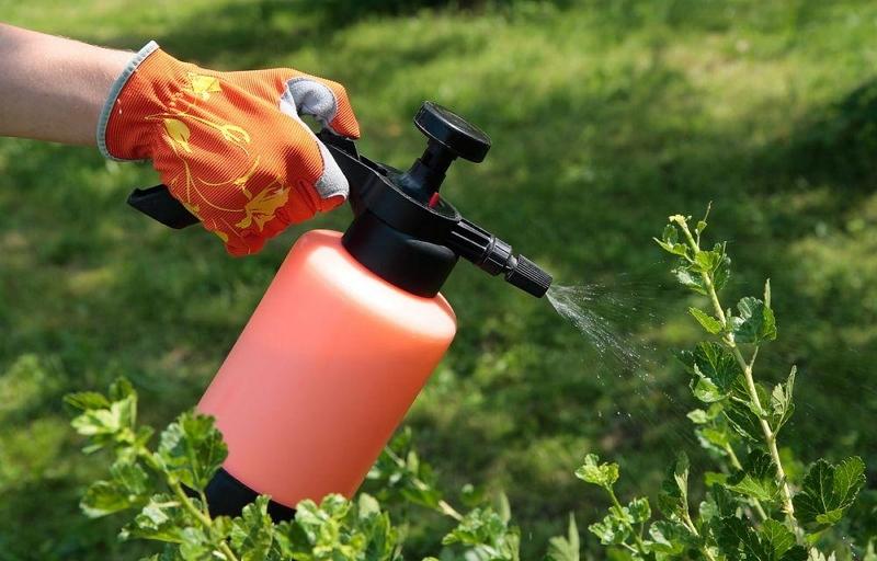 Вот как правильно проводить летние жидкие подкормки сада
