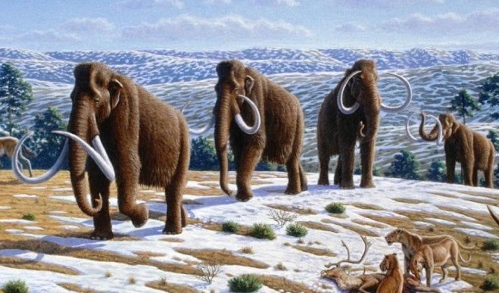К вопросу о вымерших мамонтах