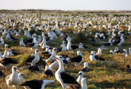 Большая-пребольшая семья альбатросов в мире, мудрость, птица, ученые, чайка, яйцо