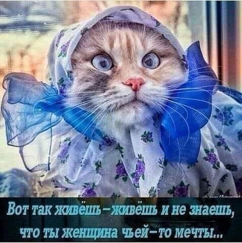 Разговор двух психиатров: - Как вы думаете, коллега, разговаривать с кошкой - это паранойя?... когда, берем, людьми, паранойя, можно, притяжения, детстве, снежинки, бумаги…—, Доктор, заразился, триппером, Пипец, делать, Цецилия, Абрамовна, пришёл—, знаетЭх, чуден, однако