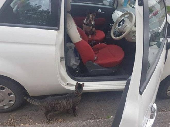 Кот возле машины