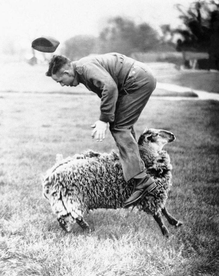 Настоящий прыжок через… овцу. настроение, позитив, юмор