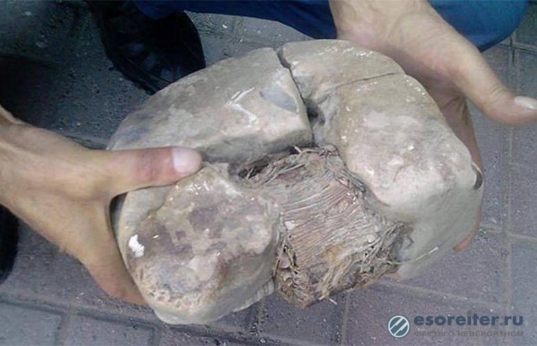 Ученые исследуют артефакт, которому 20 тысяч лет.