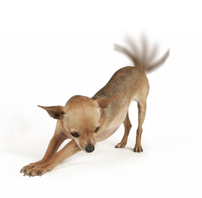 Интересные и малоизвестные факты о собаках интересно, собаки, факты