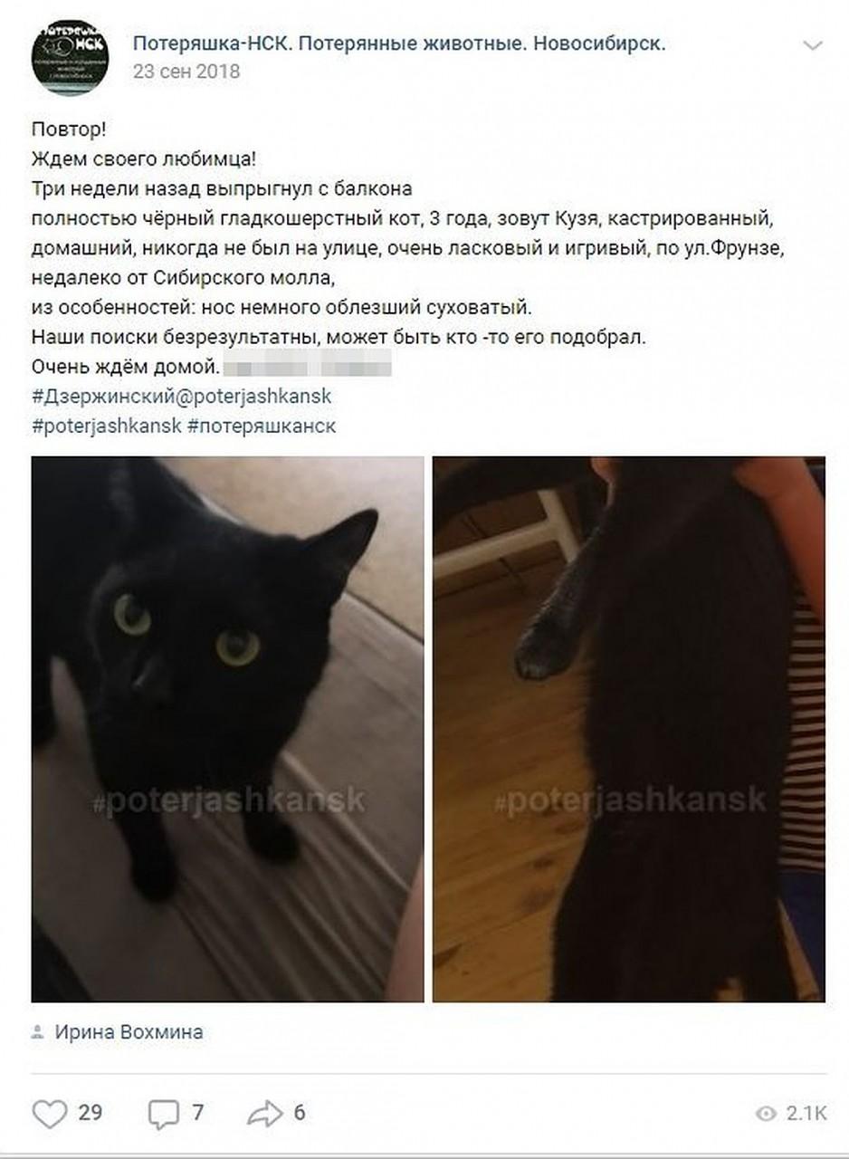 Ирина три месяца искала любимого кота. Фото: СОЦСЕТИ