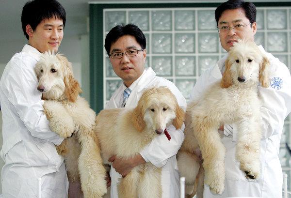 Вторая жизнь: сколько стоит и зачем нужно клонирование собак