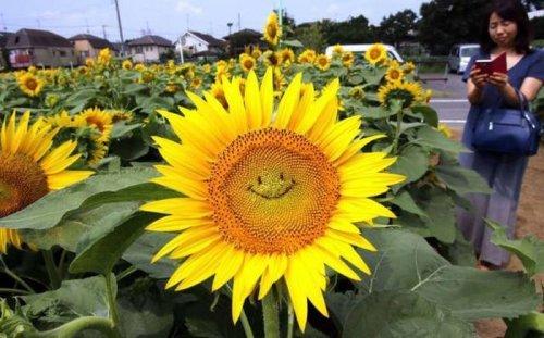 Подборка веселых фотографий и смешных картинок из сети